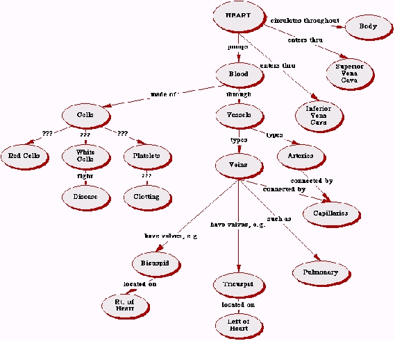 Complete The Concept Map Comparing Mitosis And Meiosis Answers.Conceptest Cat